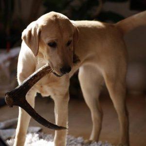 My Antler Dog Chews - Chicago Artisan Market
