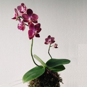 The Art of Orchids - DIY Class at Chicago Artisan Market
